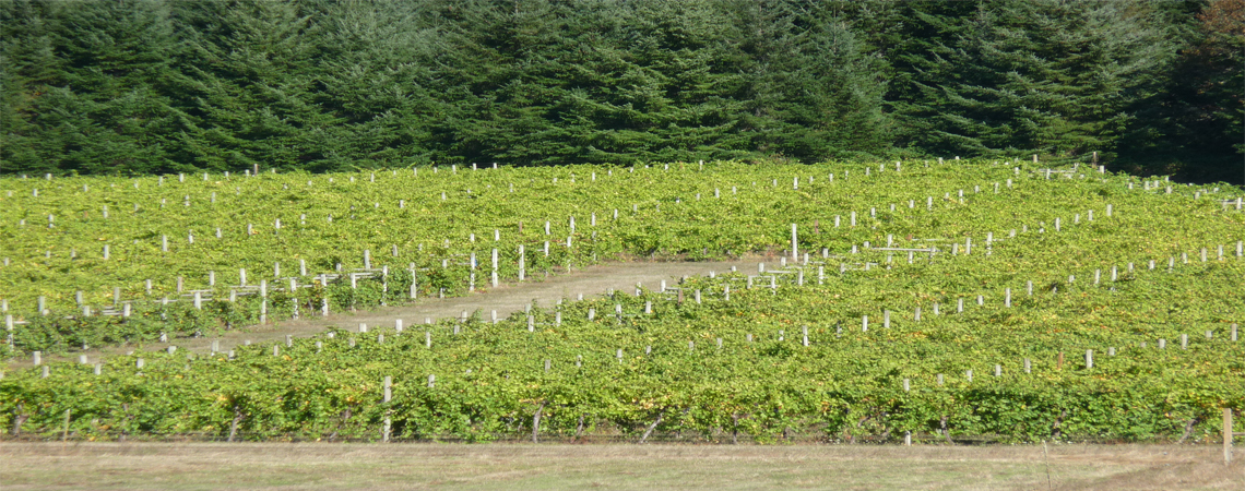 Visit the Elkton Oregon Viticultural Area!